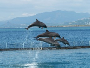 Newest Dolphin Program: Dolphin Meet and Feed