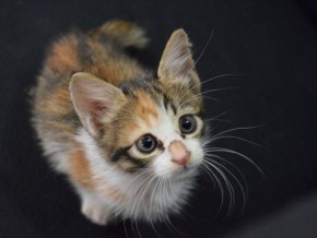 PETA offers reward up to PHP50,000 to catch cat killers