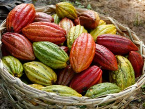 PH to target $250M earnings from Cacao exports by 2022