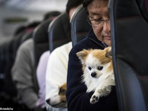 JAL launches flight which allows passengers to fly with their pets