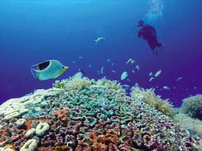 USAID launches P1.2-b 'Protect Wildlife' project