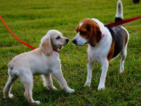6 Places for Dog Walking in Makati and Taguig For You and Your Furkids' Quality Time