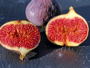 Figs Are Being Grown in the Philippines