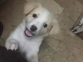 Makati to Launch microchips for Pets