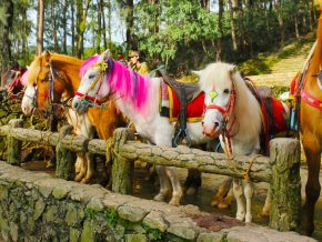 Baguio City vies to be PH's first UNESCO creative city