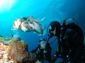 Scuba Diving Schools in Metro Manila