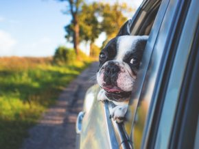 LTFRB: Pets Are Now Allowed Inside PUVs