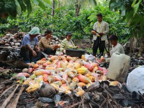 Davao City Recognized as Cacao Capital of the Philippines