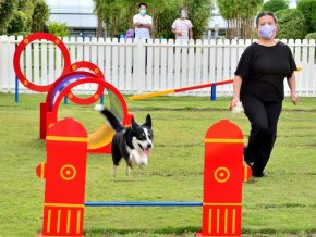 SM Aura Opens First Outdoor Obstacle Course for Pets