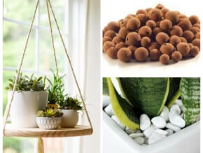 Essentials To Keep Your Plants Look Prettier