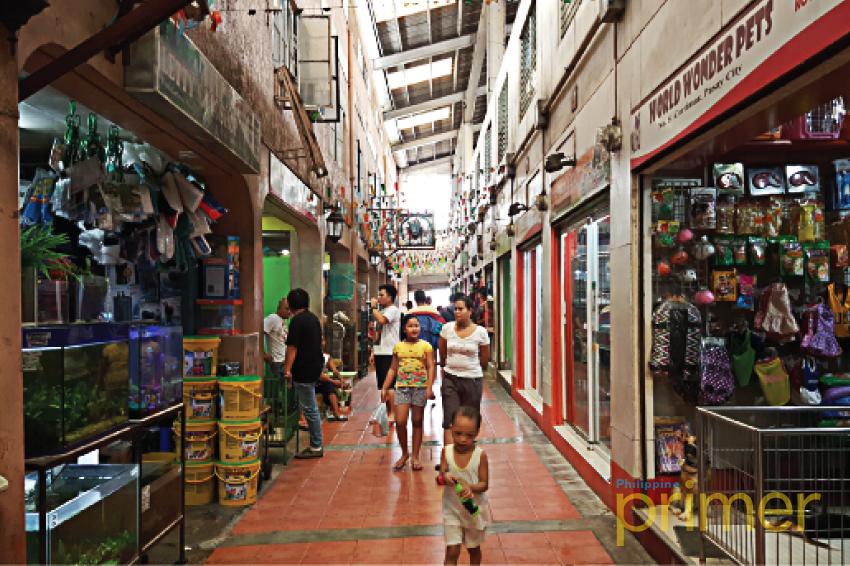 List: Pet Shops in Metro Manila | Philippine Primer