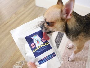 Balanced Pet Meals: Your Source of Fresh and Healthy Pet Food