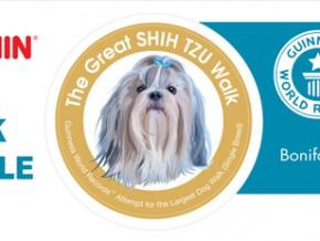 The Great Shih Tzu Walk