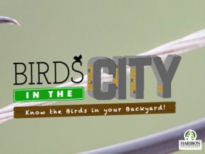 Birds in the City: Know the birds in your backyard!
