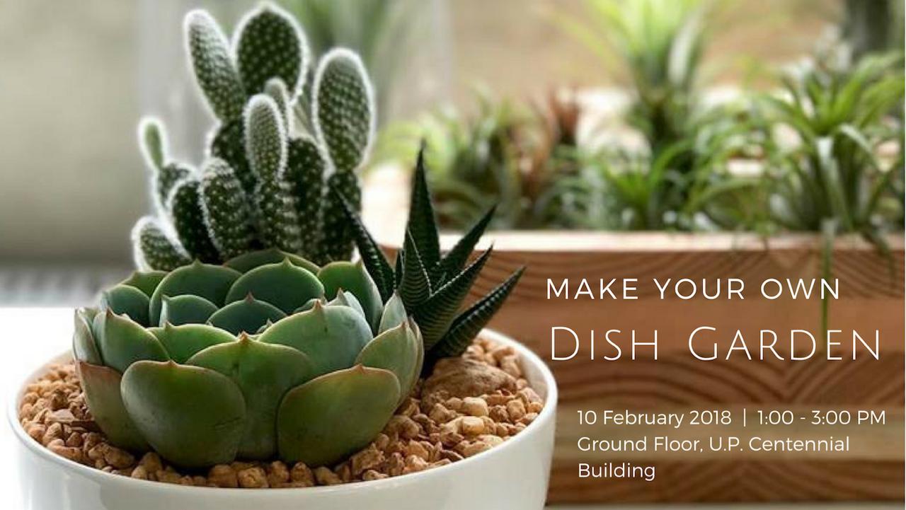 Make Your Own Dish Garden Hands On Workshop Philippine Primer