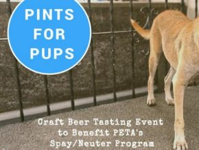 Pints for Pups: A Night of Craft Beer Tasting to Help Animals