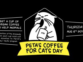 Celebrate International Cat Day with PETA's Coffee For Cats