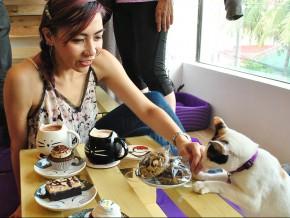 Cat Café Manila in Maginhawa, QC