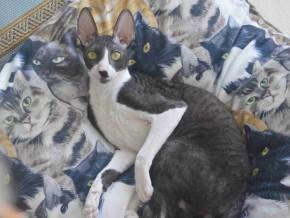 Velvet Friends Cat Café