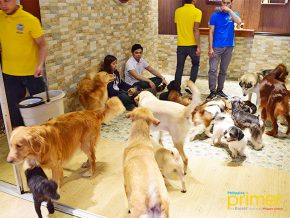 Barkin' Blends Dog Cafe: A paradise for canine lovers