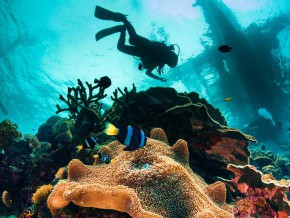 Scuba Diving for Beginners: Explore the Philippine seas