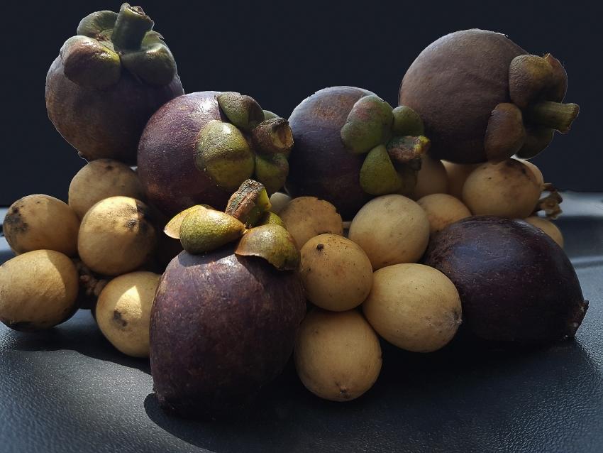 round-fruits-sample