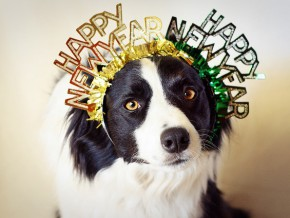 Tips on how to keep your pets safe this New Year's Eve