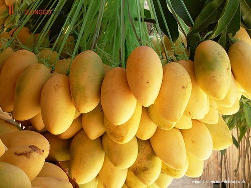 Mango-Exports5