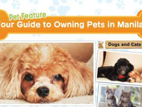 Your Guide to Owning Pets in Manila