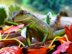 Guide to Owning Exotic Pets in the Philippines