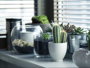 Easy Ways to Set up a Garden in Your Condo
