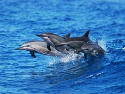 Dolphin Watch Isla Tours
