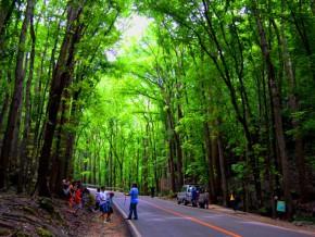 Bohol's Billar Manmade Forest