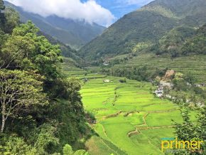 Hungduan Rice Terraces Cluster in Ifugao Echoes a Solemn Persona with Springs and Rivers