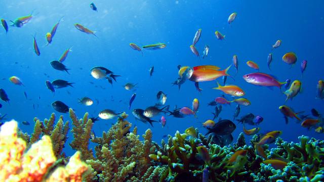 20140117-tubbataha-reef-gregg-yan