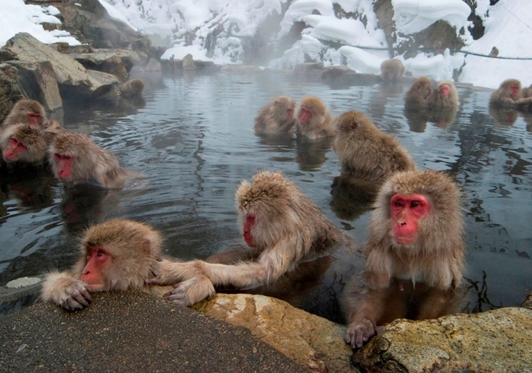 nagano japan first time guide to zenkoji temple and snow monkeys