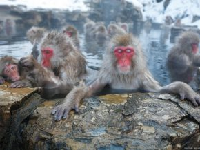 NAGANO, JAPAN: First time Guide to Zenkoji Temple and Snow Monkeys for Filipinos