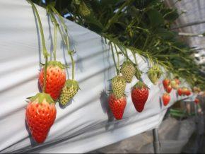 Glass Museum and Strawberry Farm in Suwa, Nagano, Japan
