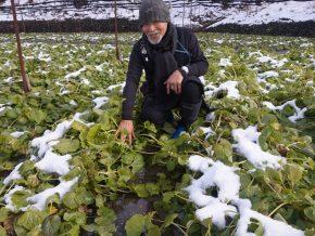 A Visit to Daio Wasabi Farm in Nagano, Japan