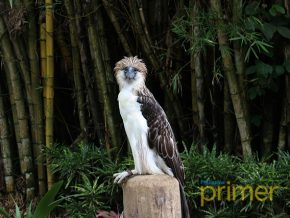 Have fun bird-watching at Philippine Eagle Center in Davao