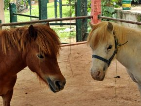 Paradizoo in Tagaytay: The First and Only Theme Farm in the City