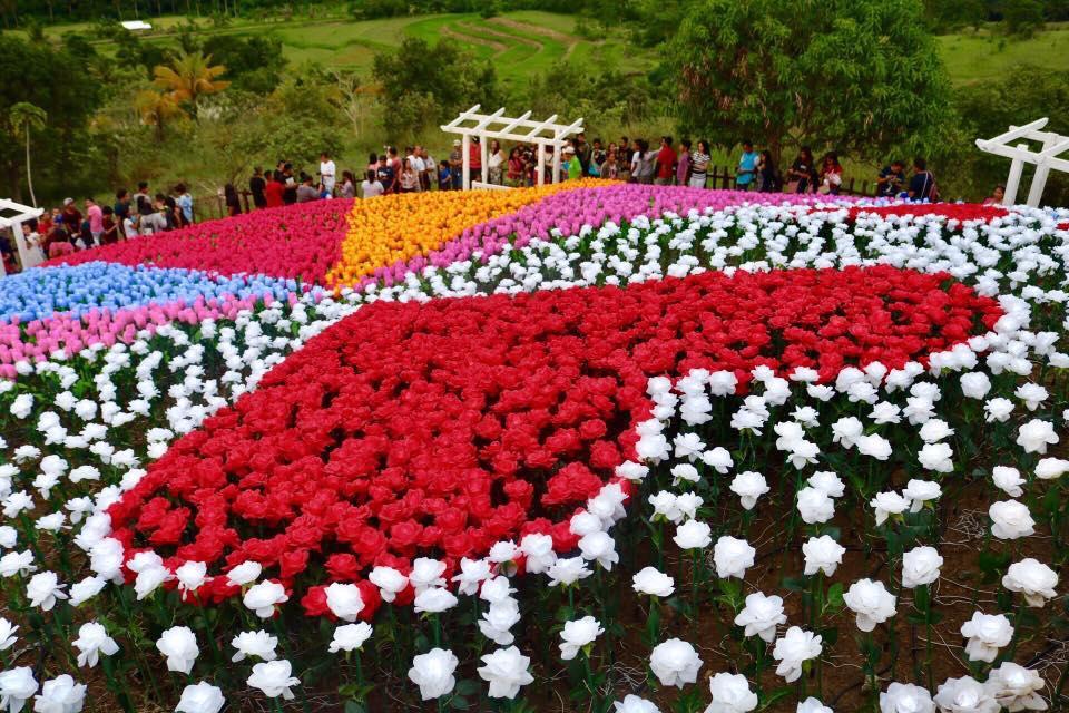Jardin necitas pilar glowing garden in bohol philippine for Jardin necitas
