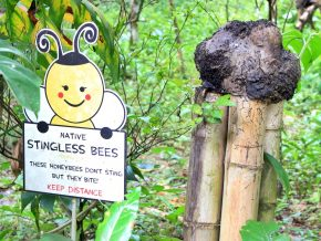 Ilog Maria Honeybee Farm in Tagaytay: Grounded in and Inspired by Nature