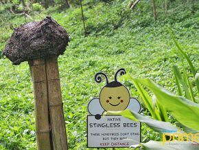 Ilog Maria Honeybee Farm in Silang Cavite: Of Native Bees and Natural Beeswax Products