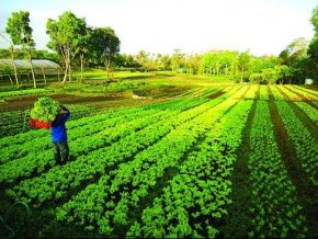 Gourmet Farms in Silang, Cavite