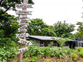 Holy Carabao Holistic Farm in Sta. Rosa, Laguna
