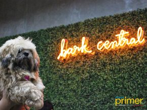 Bark Central in Eastwood City: Manila's first indoor off-Leash dog park