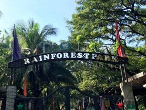Rainforest Adventure Experience and new Sunflower Field