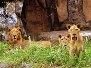 Avilon Zoo in Rizal: The Largest Zoological Institution in PH