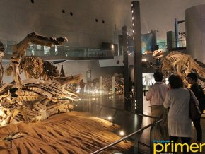 JAPAN TRAVEL: Fukui Prefectural Dinosaur Museum